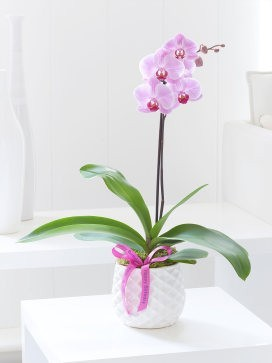 Happy Birthday Pink Phalaenopsis Orchid