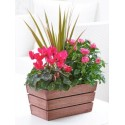 Rosy Pink Autumn Planter