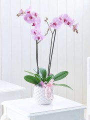 Striking Pink Mother's Day Orchid