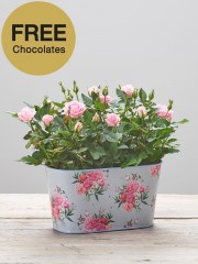 Mother's Day Rose Tin